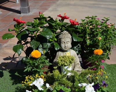 Plantas que aguantan a pleno sol en verano como unas for Viveros madrid sur